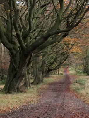 Lady's Walk, Fife