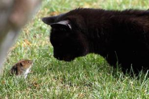 A cat and a mouse look at each other