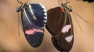 Butterflies by Tim Jones