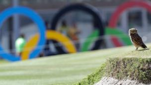 A burrowing owl rests on the ninth hole of the Olympic golf course near its nest in a sand bunker during a practice round