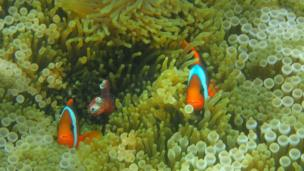 Buscando a Nemo en Indonesia