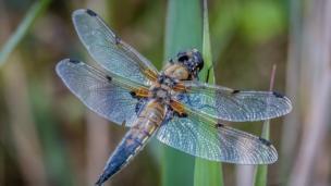 Flying bug at Farmoor