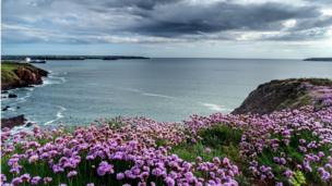 Paul Morgan took this photograph of the view overlooking Lindsway Bay, St Ishmaels, Pembrokeshire.