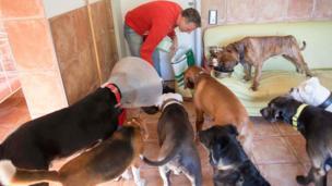 Dem dey feed di dogs.