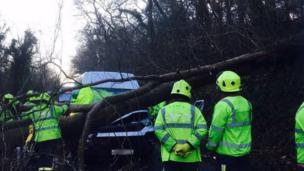 Tree brought down in Torpoint, Devon