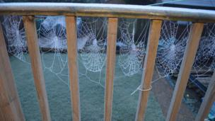 Spider webs covered in frost