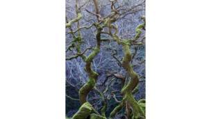 Árboles en Derbyshire, Inglaterra