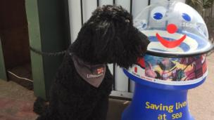 Sampson the dog sitting next to a collection box for RNLI