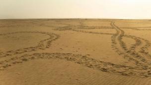 آثار سير السلاحف على الرمال