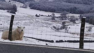 Eira? Dim problem os oes 'da chi got fel fi! // Snow? No problem if you've got a coat like this!