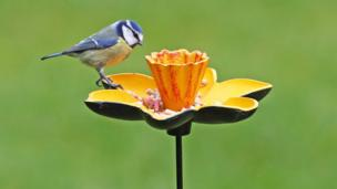 A bird feeding, taken by Steve Turner