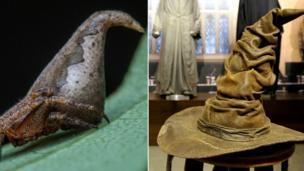 Eriovixia Gryffindori and the sorting hat