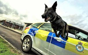 Служебный пес Бако выпрыгивает из окна полицейской машины