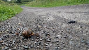 A slug and a snail in Ascott-Under-Wychwood