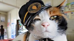 Tama the feline station master in Kinokawa, Japan