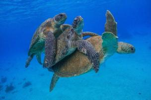Three turtles