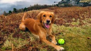 Honey the golden retriever on a hill top with Luss in the background