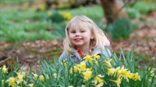 Girl playing among daffodils