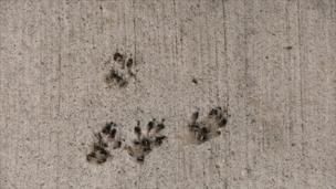 Squirrel foot prints
