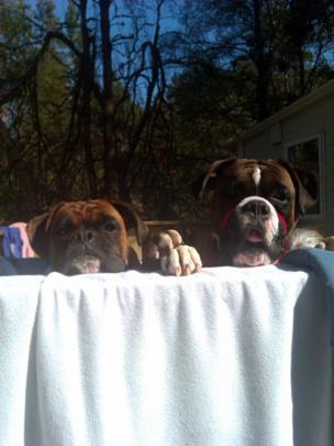 Dogs Friskie and Mackenzie