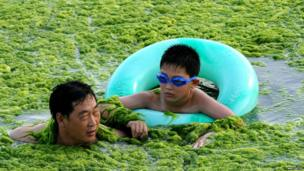 Father and son swimming in algae in eastern China.