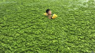 A child swimming in the green algae in the east of China.