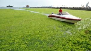 A man using a boat to get through the algae in eastern China.