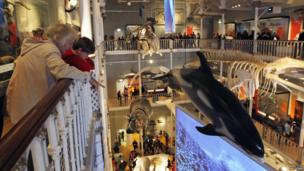 Displays of animals at the National Museum of Scotland