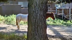 Two horses partially hidden behind a tree