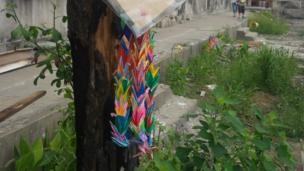 Origami cranes hanging from a tree in a school in Ishinomaki.