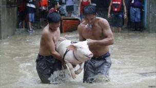 Residents carry a pig as they wade knee-deep in floodwaters