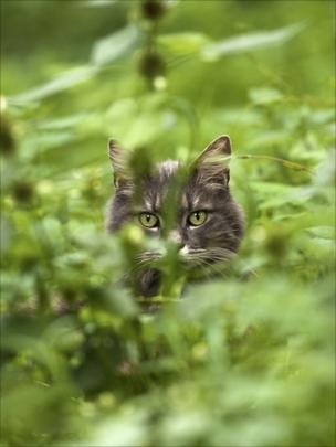 A cat with green eyes partially hidden by grass in a garden