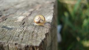 A snail on top of a wooden fence post