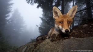 Klaus Echle/Veolia Environnement Wildlife Photographer of the Year 2011