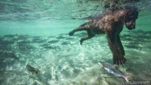 Paul Souders/Veolia Environnement Wildlife Photographer of the Year 2011