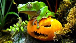 A frog on a pumpkin