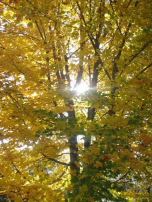Sun shining through the leaves of a tree