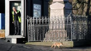 Woman watches a fox walk past