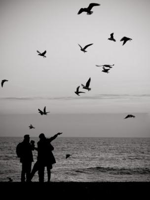 People feeding seagulls, Brighton, England