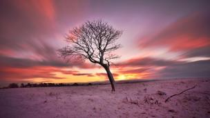 Tree in a field covered in snow