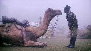 Soldier speaking to camel