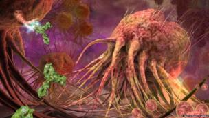 A cell that helps against illnesses trying to attack a cancer cell.