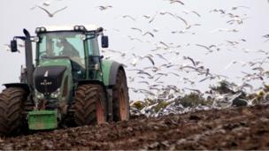 Gulls swoop on a field following a plough man