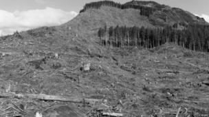 Image of deforestation in Oregon, USA, taken in 1999