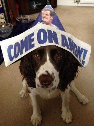 Springer spaniel Lola wears a hat in support of Andy Murray