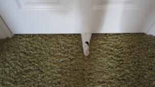 A cat's paw under a door