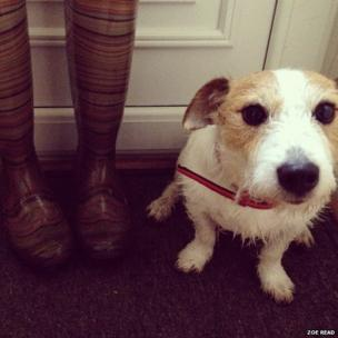 Boots and a wet dog