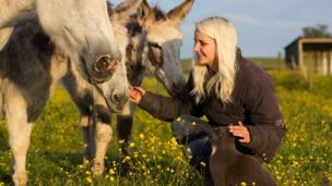 Attya and animals in a field