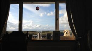 Archie the labrador looks through a window