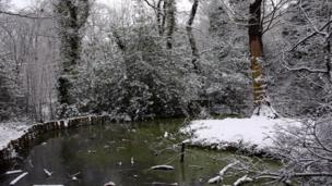 Pond with ice and snow surrounding it